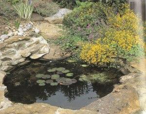 Water Garden Pool